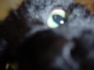 Chelseacat